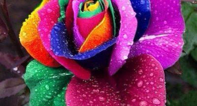 Sobre a negação da morte e a beleza das flores